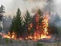Пожарная безопасность в лесах, ответственность правонарушения и преступления в указанной сфере.